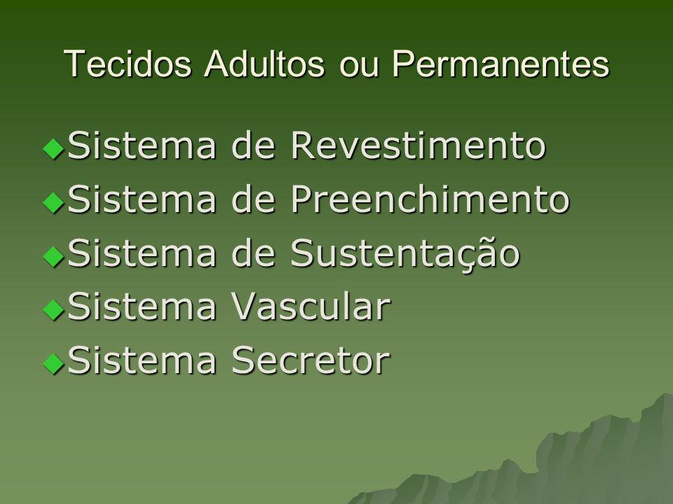 Tecidos Adultos ou Permanentes Sistema de Revestimento Sistema de Revestimento Sistema de Preenchimento Sistema de Preenchimento Sistema de Sustentaçã