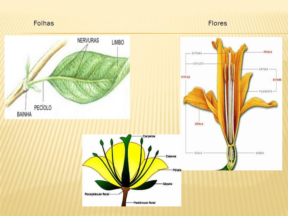 FolhasFlores