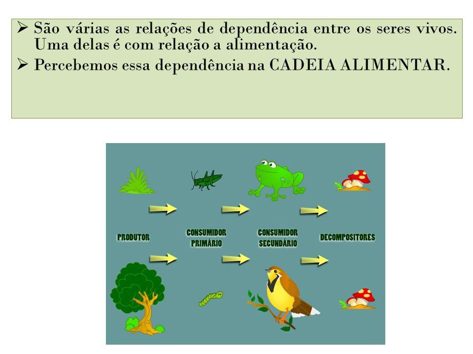 São várias as relações de dependência entre os seres vivos. Uma delas é com relação a alimentação. Percebemos essa dependência na CADEIA ALIMENTAR.