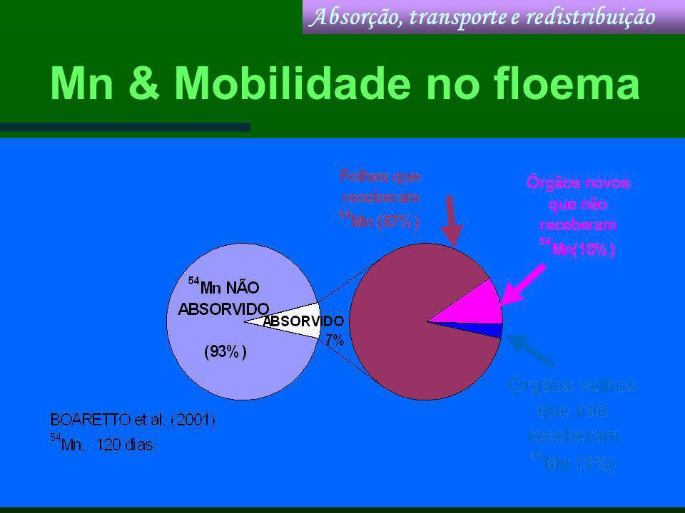 Mn & Mobilidade no floema Absorção, transporte e redistribuição