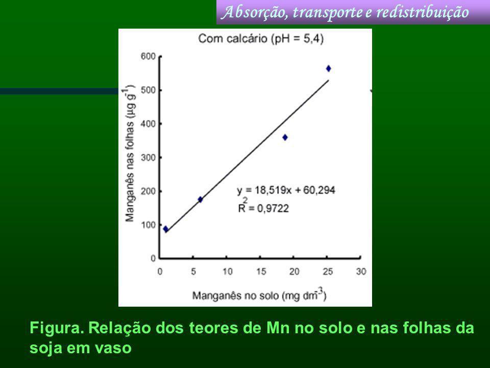 Figura. Relação dos teores de Mn no solo e nas folhas da soja em vaso Absorção, transporte e redistribuição