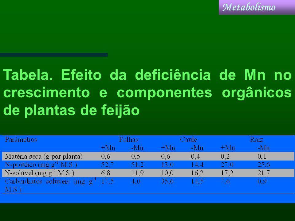 Tabela. Efeito da deficiência de Mn no crescimento e componentes orgânicos de plantas de feijão Metabolismo