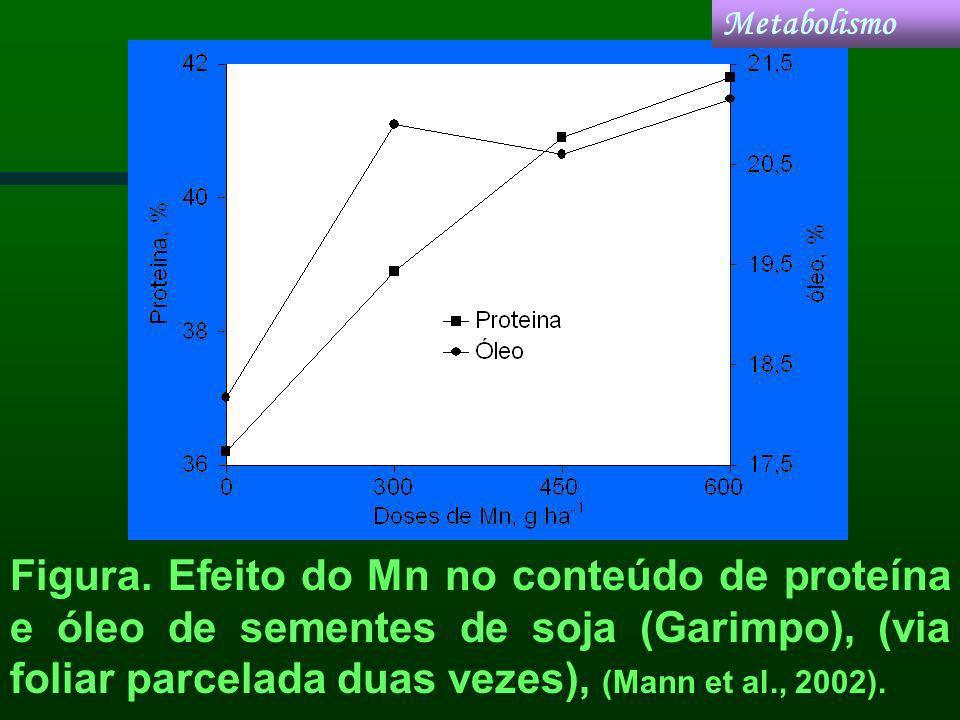 Figura. Efeito do Mn no conteúdo de proteína e óleo de sementes de soja (Garimpo), (via foliar parcelada duas vezes), (Mann et al., 2002). Metabolismo