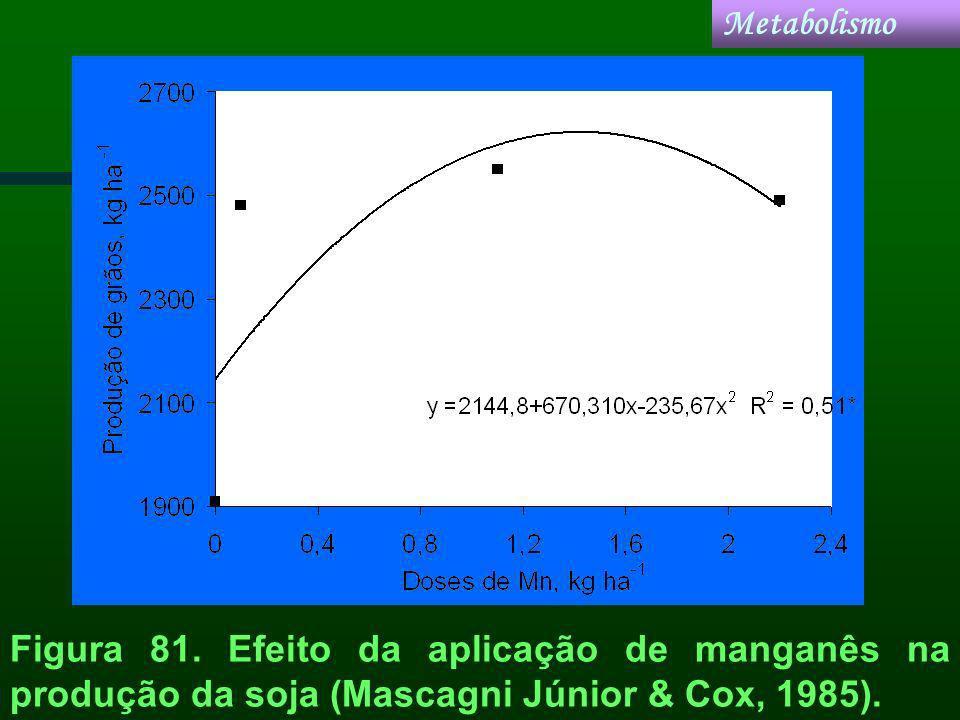 Figura 81. Efeito da aplicação de manganês na produção da soja (Mascagni Júnior & Cox, 1985). Metabolismo