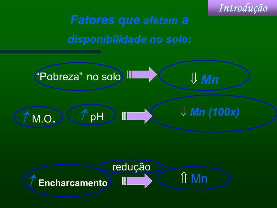 Mn Fatores que afetam a disponibilidade no solo: M.O. Pobreza no solo pH Encharcamento Mn (100x) Mn redução Introdução