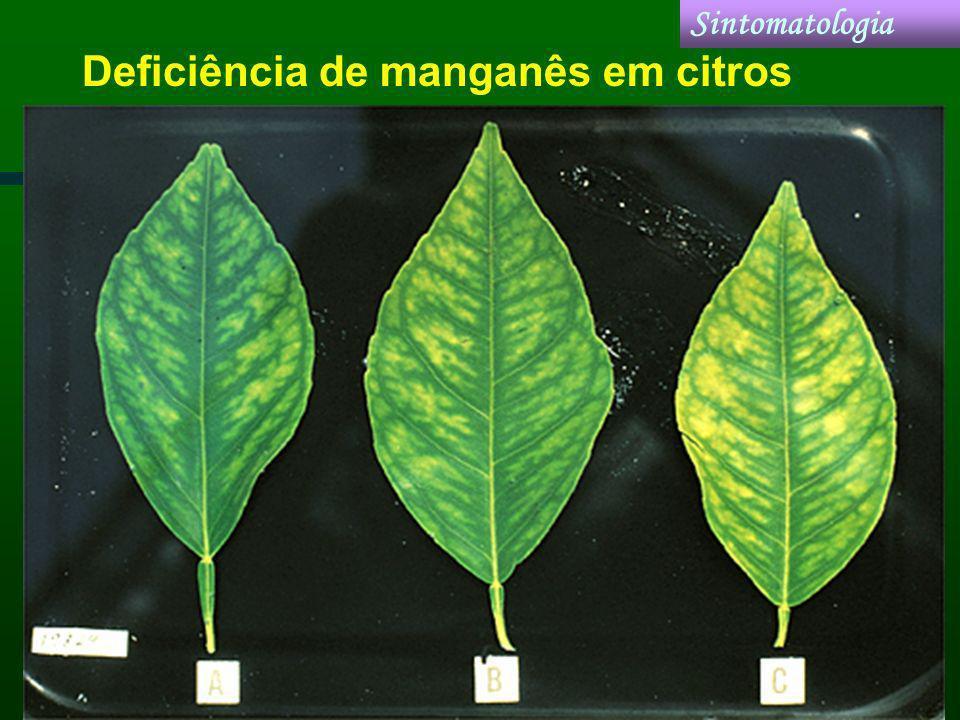 Deficiência de manganês em citros Sintomatologia