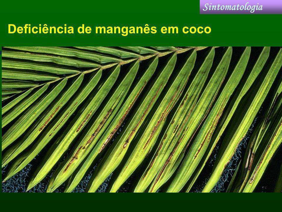 Deficiência de manganês em coco Sintomatologia