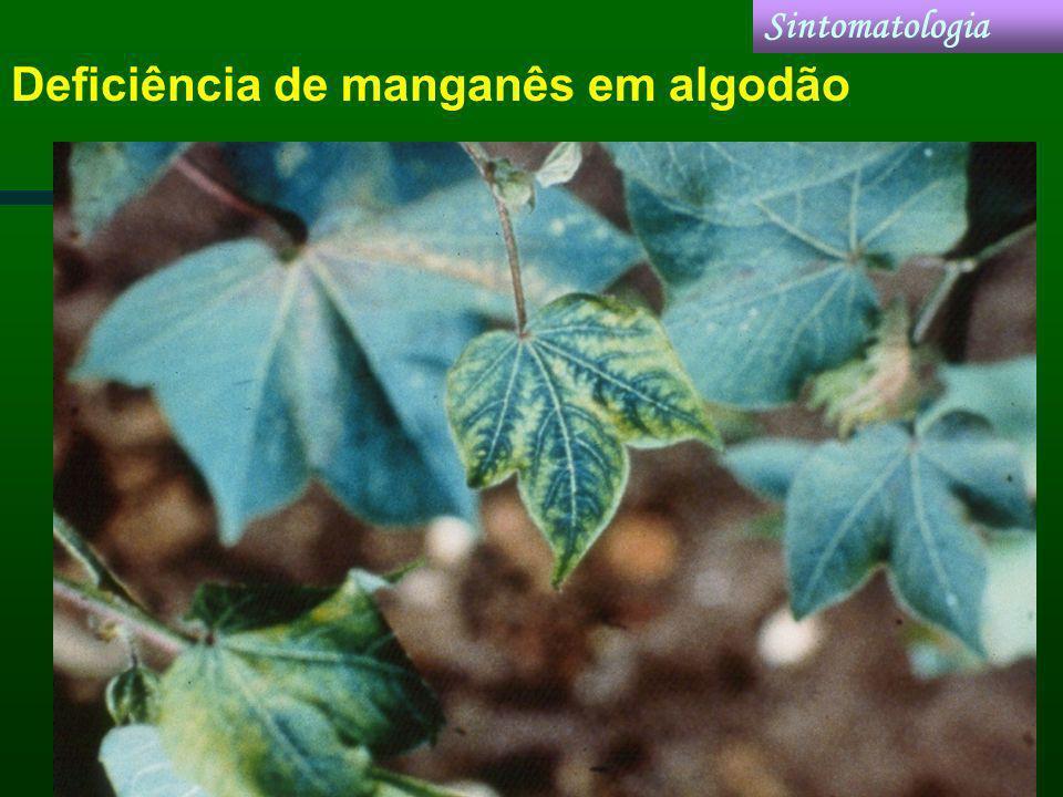 Deficiência de manganês em algodão Sintomatologia
