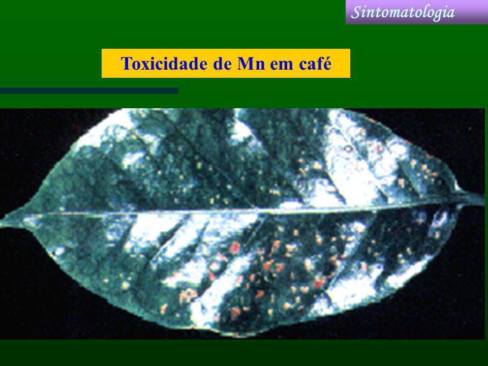 Toxicidade de Mn em café Sintomatologia