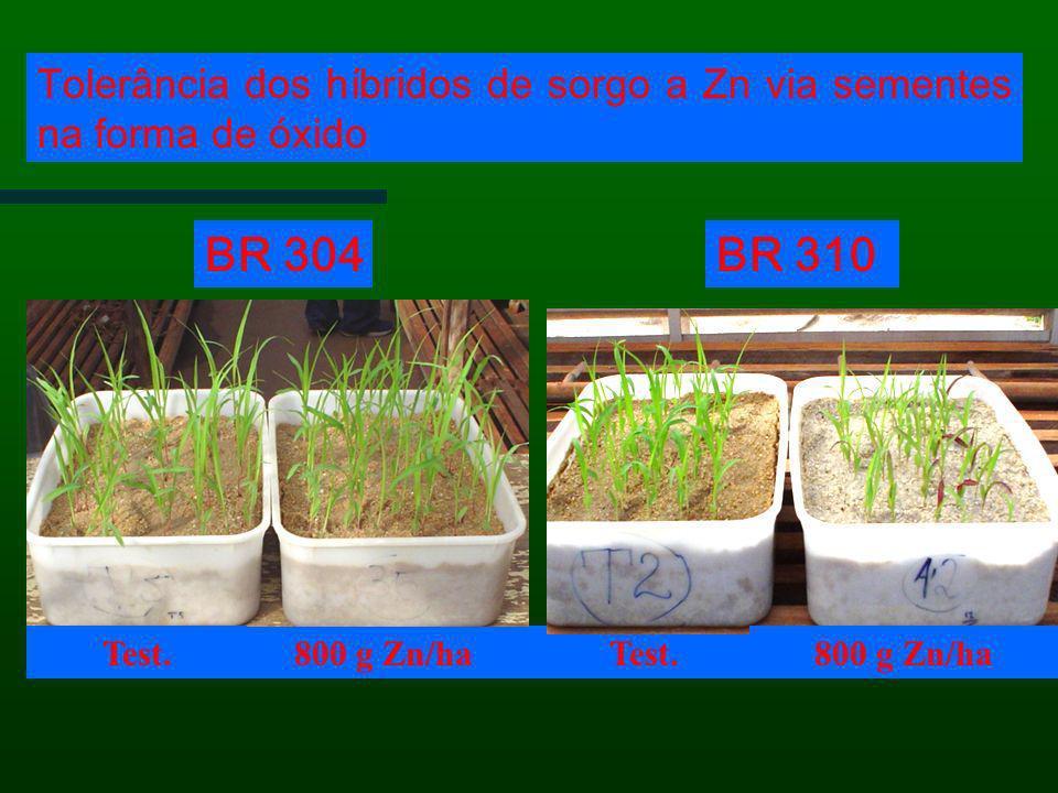 Tolerância dos híbridos de sorgo a Zn via sementes na forma de óxido Test.800 g Zn/ha Test. BR 310BR 304