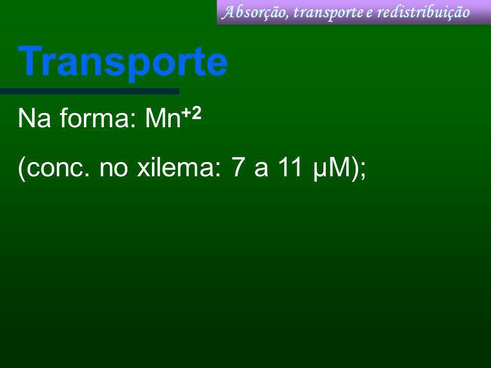 Transporte Na forma: Mn +2 (conc. no xilema: 7 a 11 µM); Absorção, transporte e redistribuição