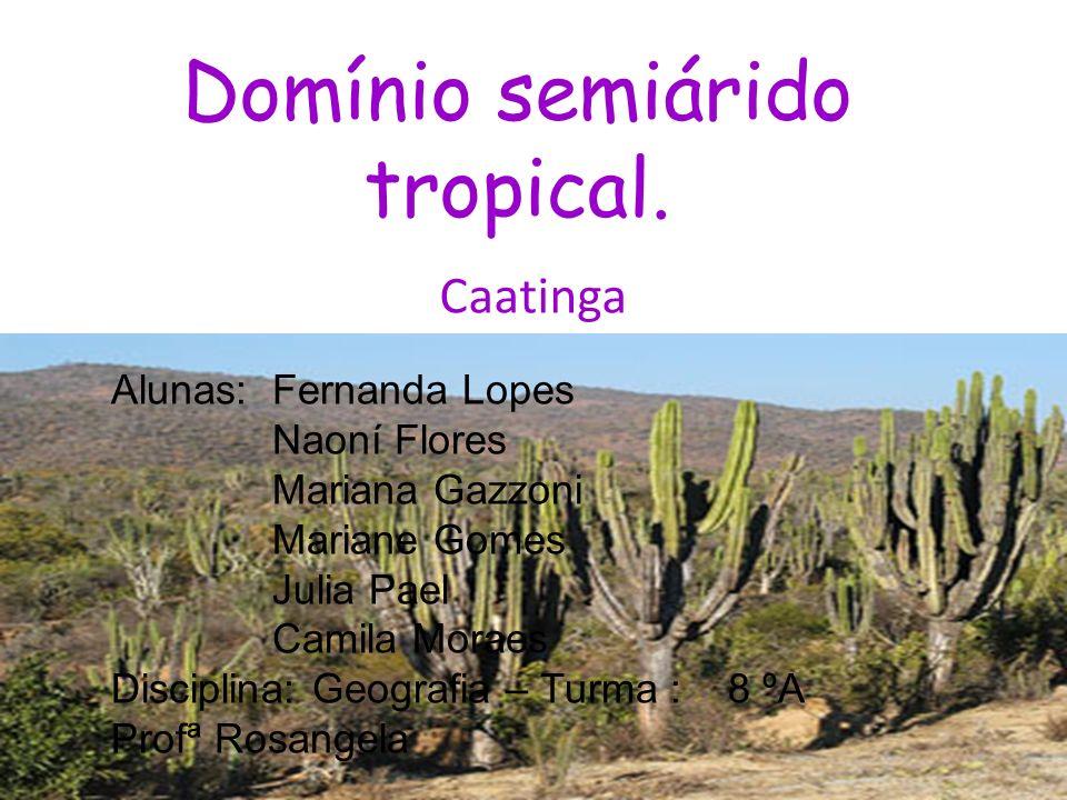 Domínio semiárido tropical. Caatinga Alunas: Fernanda Lopes Naoní Flores Mariana Gazzoni Mariane Gomes Julia Pael Camila Moraes Disciplina: Geografia