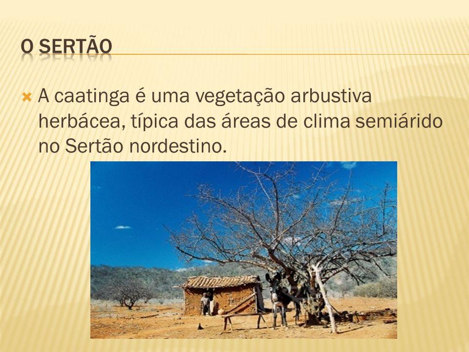 A caatinga é uma vegetação arbustiva herbácea, típica das áreas de clima semiárido no Sertão nordestino.