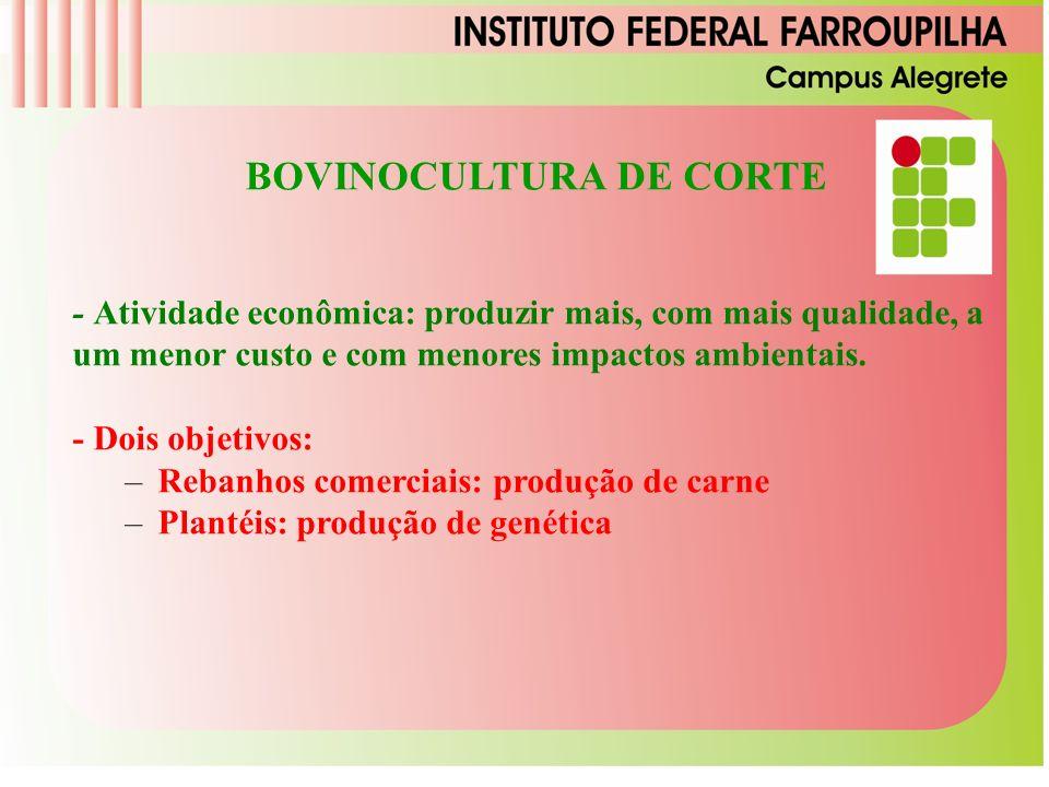 BOVINOCULTURA DE CORTE - Atividade econômica: produzir mais, com mais qualidade, a um menor custo e com menores impactos ambientais.