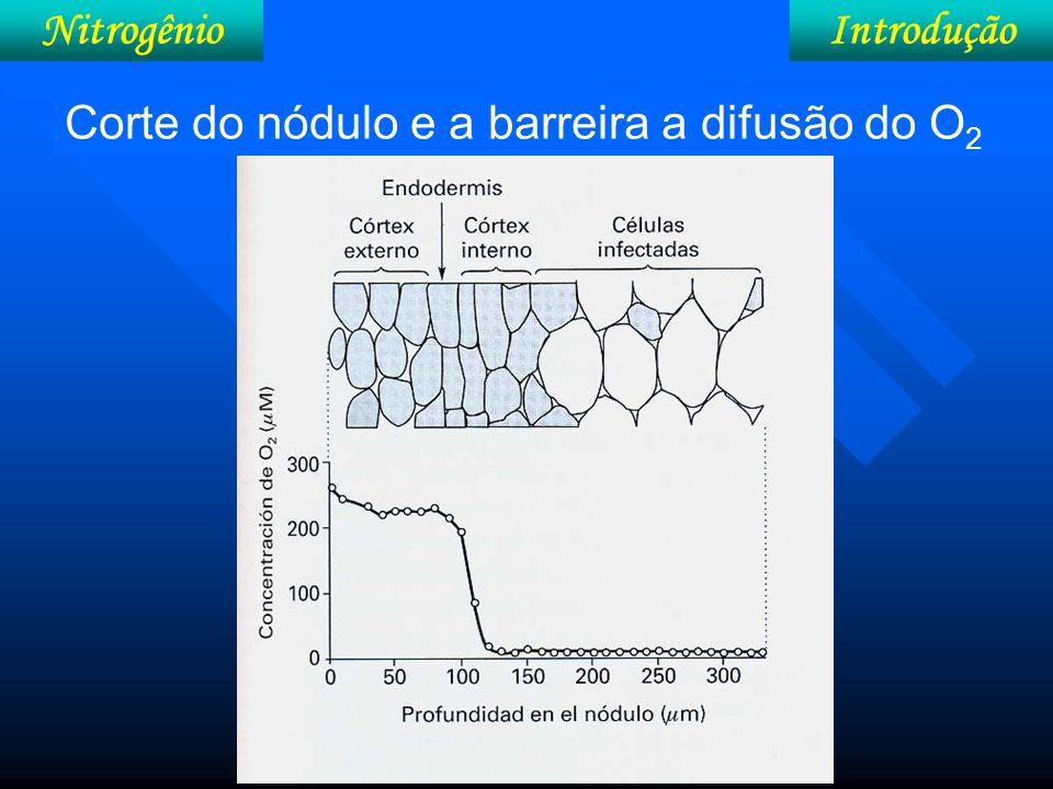 IntroduçãoNitrogênio N no solo 5% Óxidos nitroso e nítrico (gás) Radical: amônio NH 4 +, Nitrito (NO 2 - ) e nitrato (NO 3 - ) 95% Em combinações orgânicas: (N-orgânico) (Não assimilável pelas plantas)