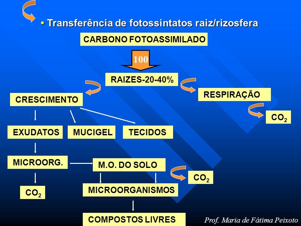 Microbiota N-orgânico N-amínico N-amoniacal N-nitrito N-nitrato Imobilização (C/N>33/1) Microbiota Nitrogênio Introdução