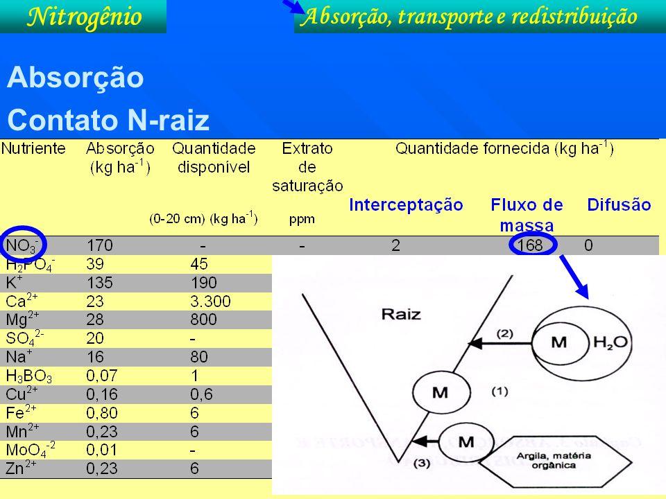 Formas absorvidas: N 2 (gás) N 2 (gás) Aminoácidos (RCHNH 2 COOH) Aminoácidos (RCHNH 2 COOH) Uréia [CO(NH 2 ) 2 )] Uréia [CO(NH 2 ) 2 )] NH 4 + NH 4 + NO 3 - (predomina) NO 3 - (predomina) Após a absorção o nitrato ( NO 3 - ) tem que ser reduzido a amônia (NH 3 ) para poder ser incorporado nos esqueletos de C.