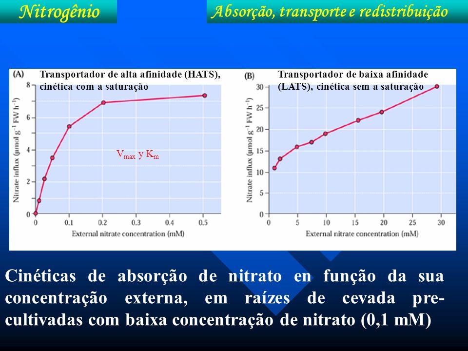 Influência da localização lateral na absorção de N- NO 3 - pelo milho (Malavolta, 1981).