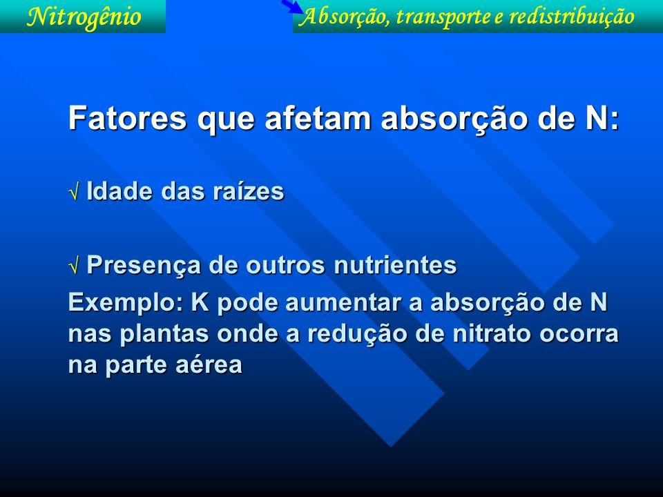 Taxas de absorção de nutriente pelo milho em função da idade da planta Idade da planta (dias) N (µmol/m raiz/dia) 20227 3032 4019 5011 606 701 800,5 Idade das raízes Absorção, transporte e redistribuição Nitrogênio