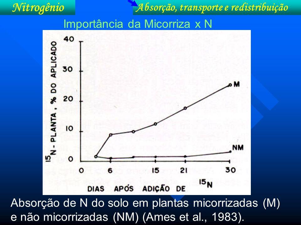 Absorção, transporte e redistribuição Nitrogênio Fatores que afetam absorção de N: ** pH pH ácido [H + ] : > competição NH 4 + : < Absorção de N [amônio] Absorção de N [nitrato]