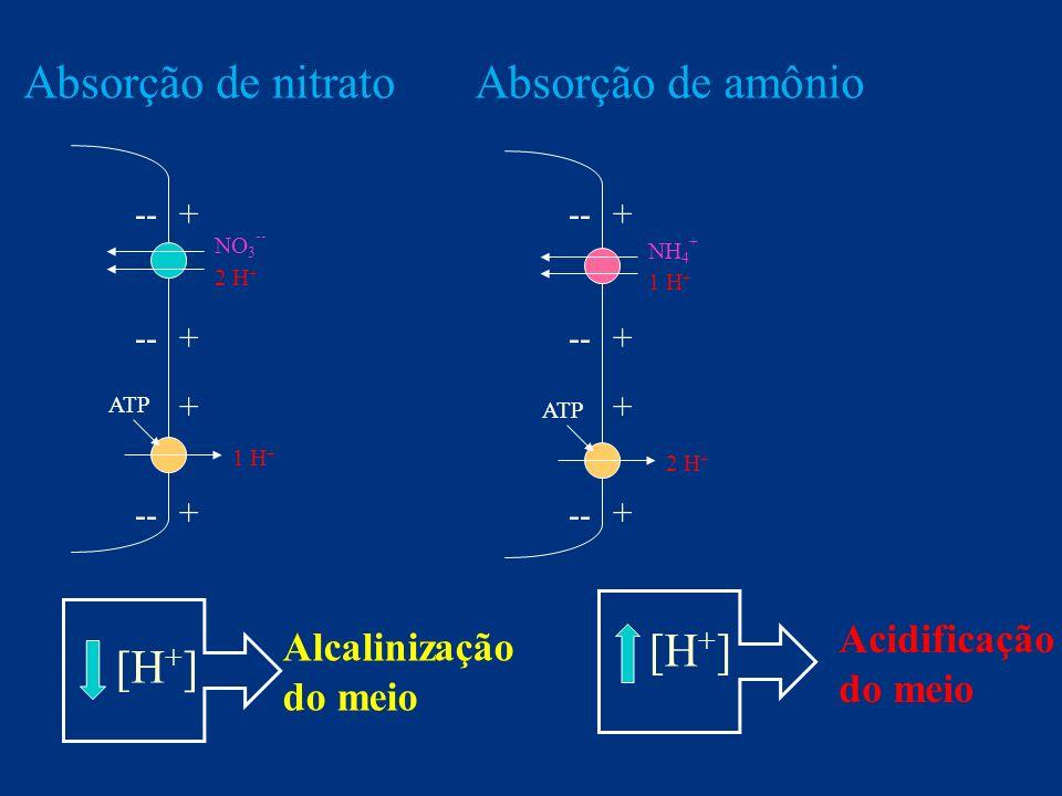 Absorção, transporte e redistribuição Nitrogênio Valor pH da solução nutritiva com nitrato e amônio durante o cultivo do girassol