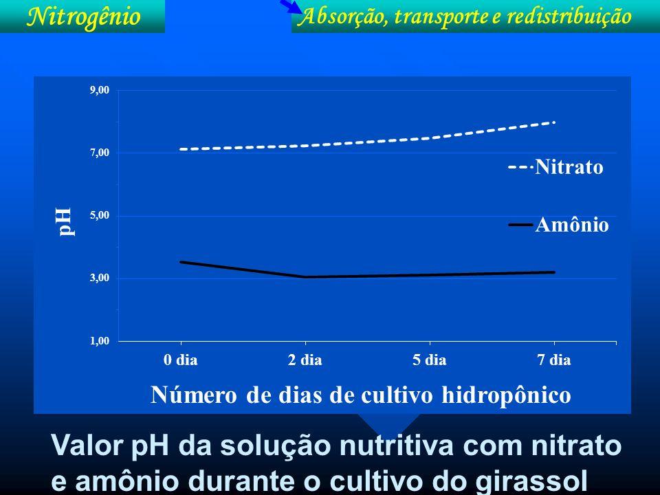 Efeito da forma de N na produção e nos parâmetros fisiológicos de milho em cultivo sob meio hidropônico Nitrogênio Absorção, transporte e redistribuição