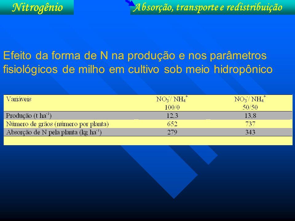 Nitrogênio Absorção, transporte e redistribuição Formas de N no crescimento do feijoeiro (Verennes)