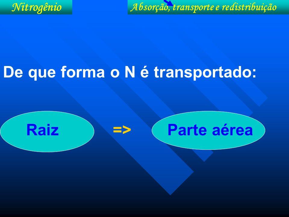 Formas de transporte do N em função da forma absorvida e o respectivo metabolismo redução assimilatória do nitrato de grupos de plantas.