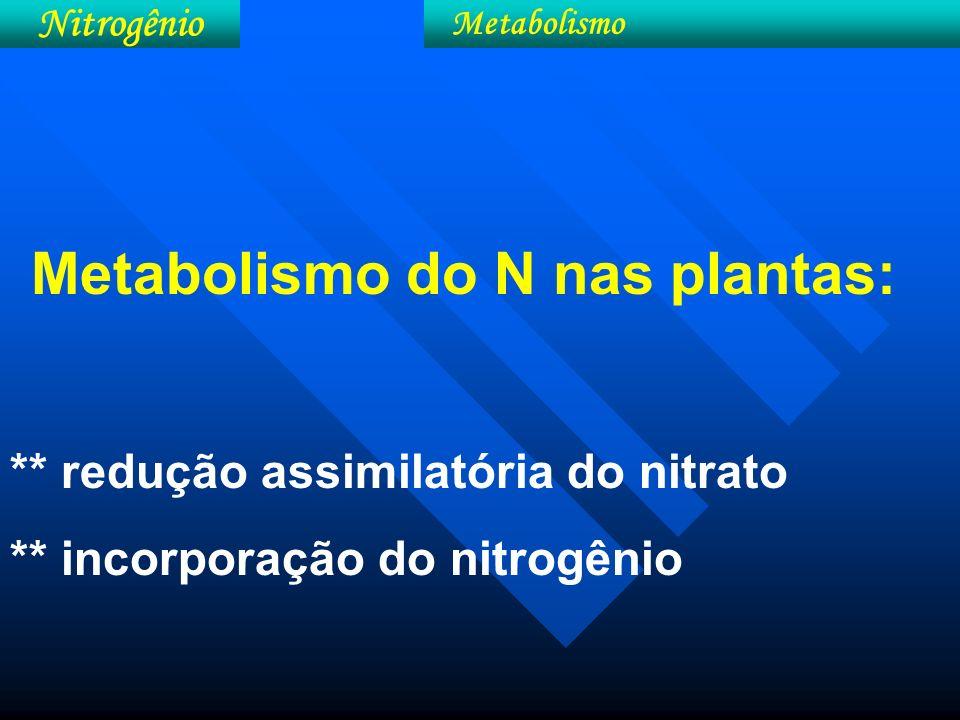 Esquema simplificado do metabolismo do N nas plantas (redução assimilatória do nitrato e incorporação do nitrogênio).