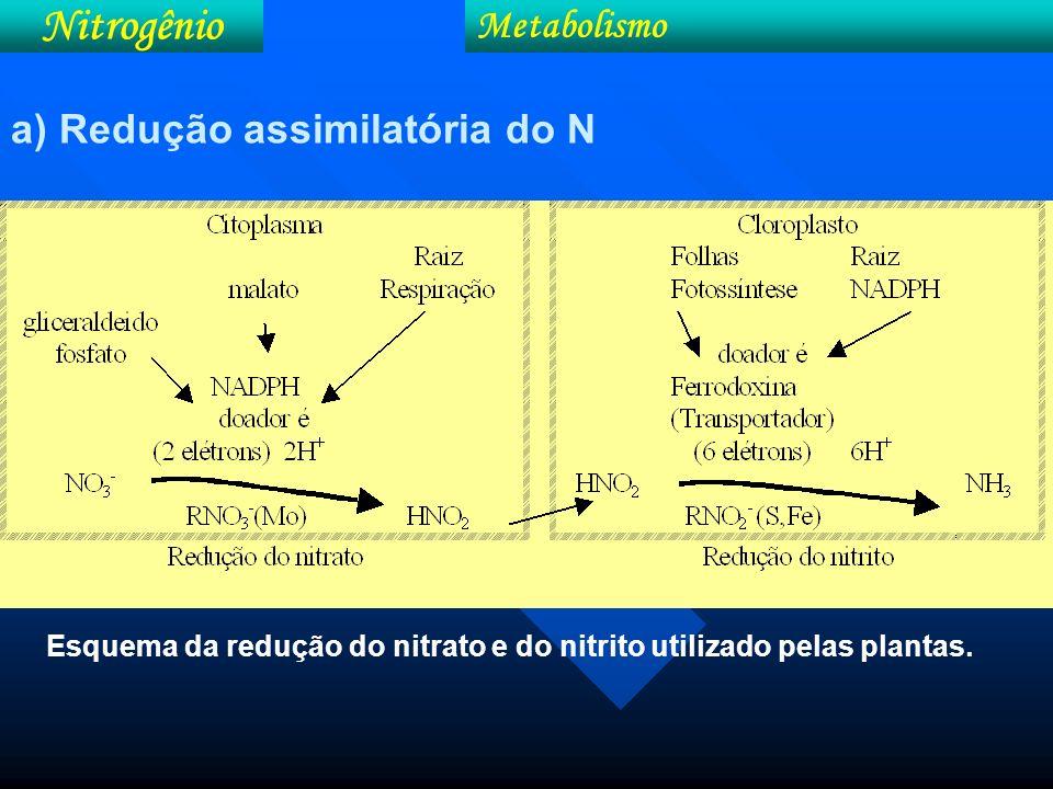 Nitrogênio N-solução => N-interior/Raiz Fatores que afetam a redução do nitrato: Luz Luz ativação e síntese da redutase; absorção do nitrato; transferência do nitrato p/ locais de ativ.
