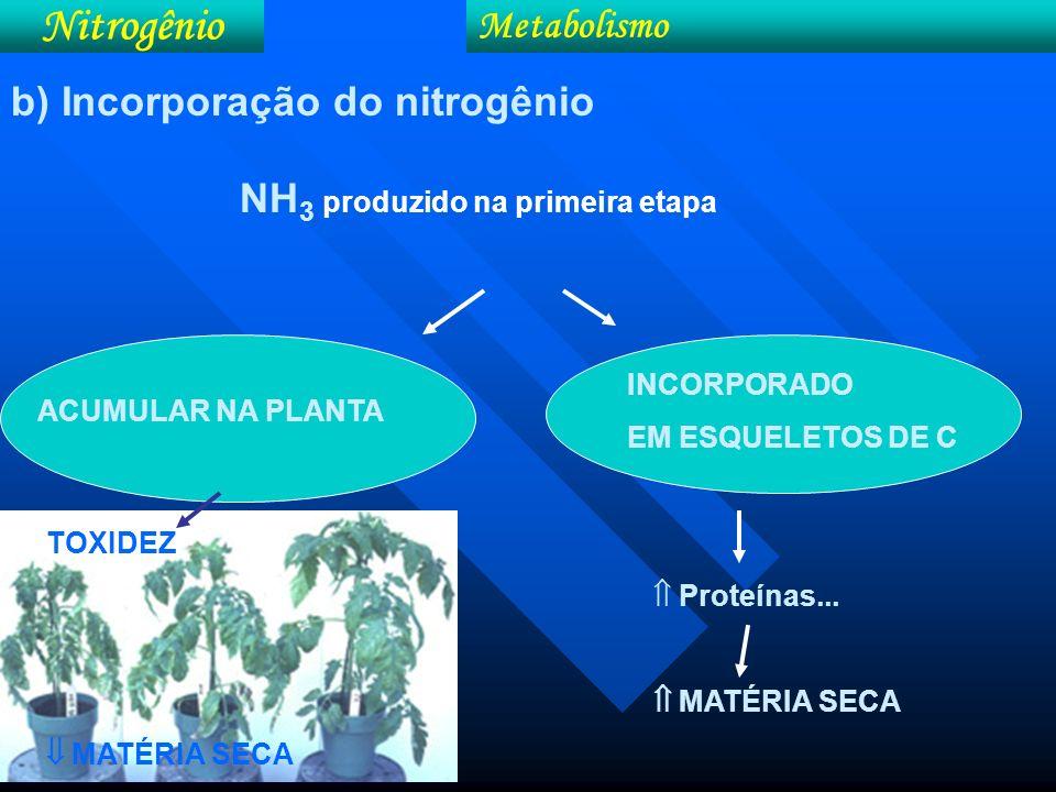 1- Via desidrogenase glutâmica (GDH) Nitrogênio Metabolismo 2- Via glutamina sintetase (GS) e glutamato sintase (GOGAT) b) Incorporação do nitrogênio