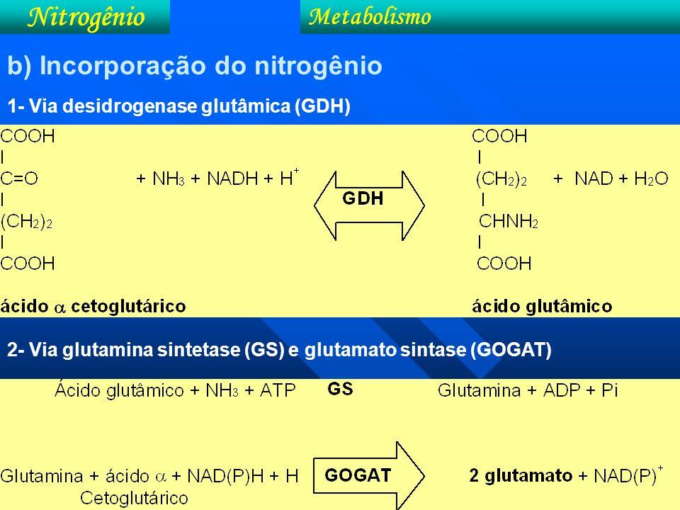 Esquema ilustrando o pigmento da clorofila Nitrogênio Metabolismo