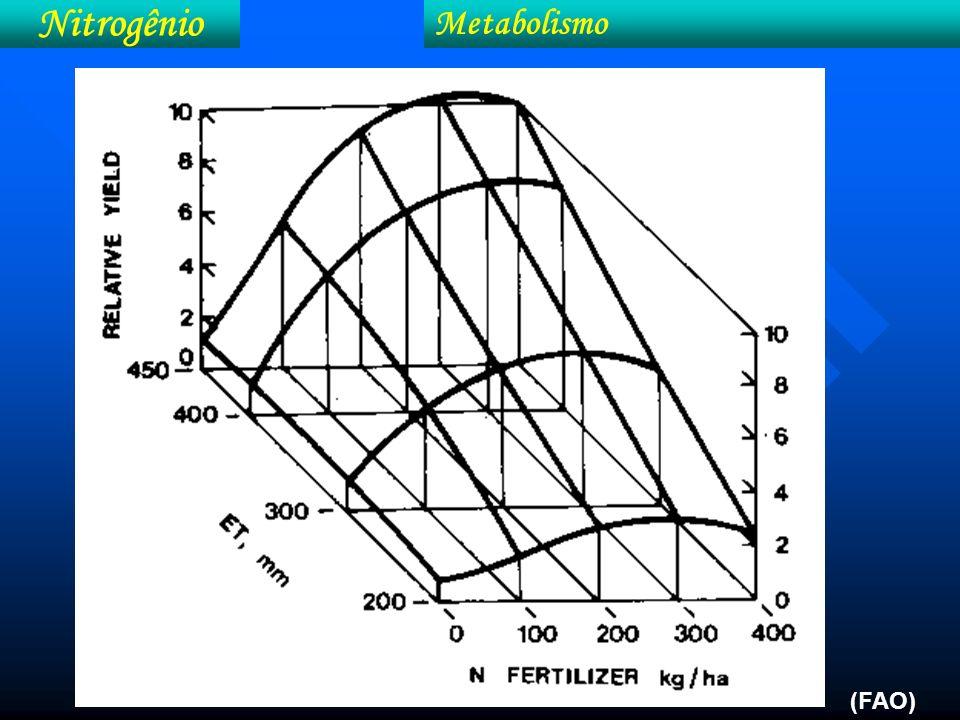 Nitrogênio Metabolismo Produção de citros em função de doses de N e o teor foliar de N (Adaptado de Malavolta et al., 1997) (b).