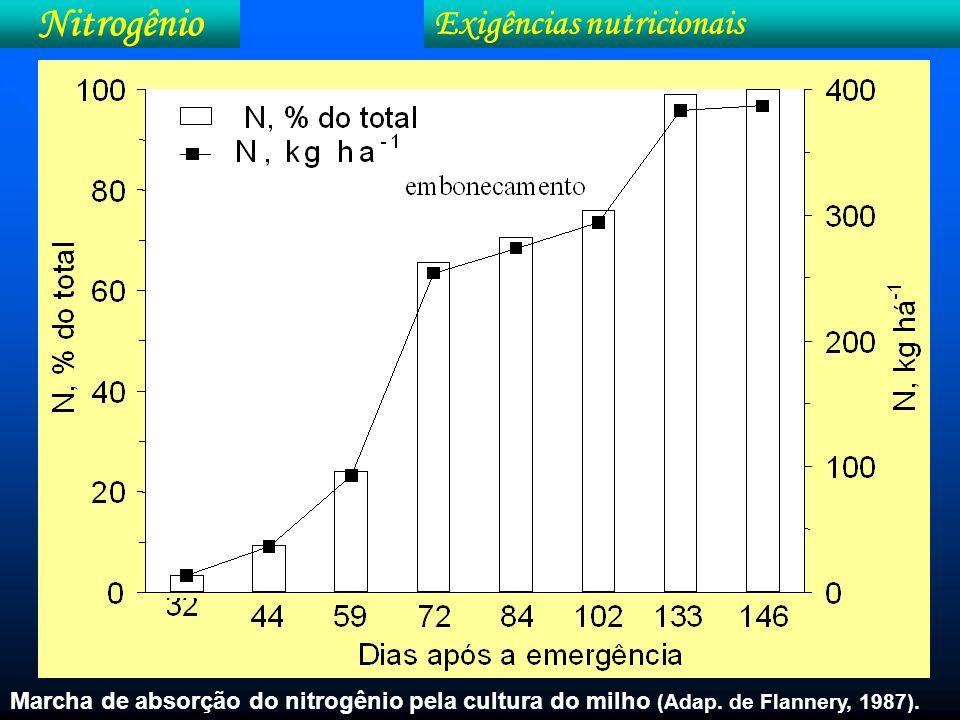 Nitrogênio Sintomatologia Problema no campo....Nutricional.