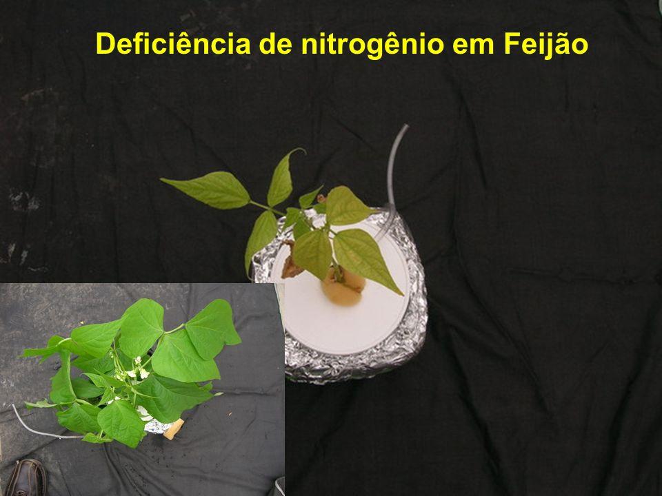 Deficiência de nitrogênio em Soja