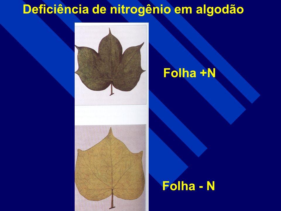 Deficiência de nitrogênio em algodão