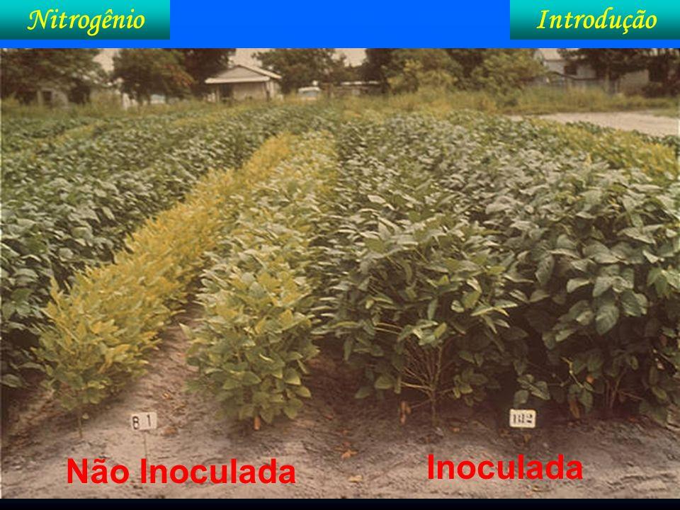 IntroduçãoNitrogênio No campo, como saber que a FBN está adequada.
