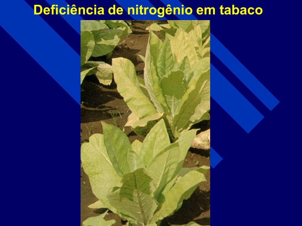 Deficiência de nitrogênio em Hortelã