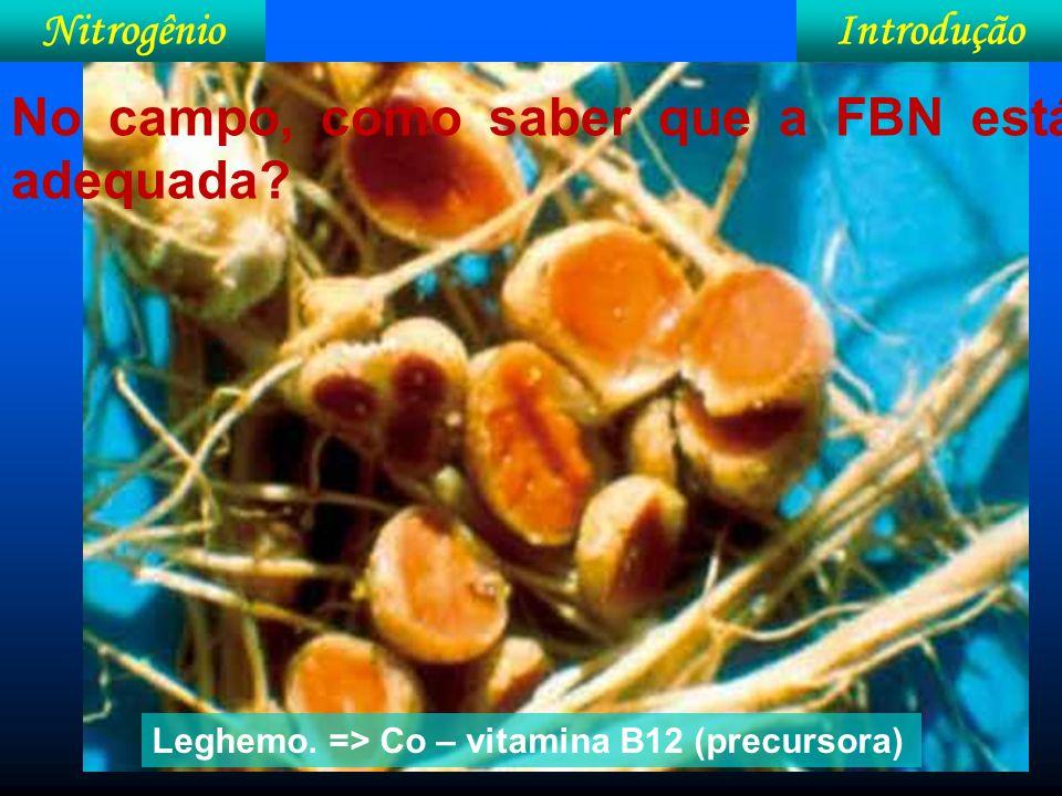 IntroduçãoNitrogênio Efeito do P na atividade da nitrogenase no teor de N na parte aérea do feijoeiro.