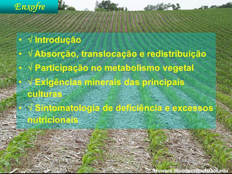 Introdução Absorção, translocação e redistribuição Participação no metabolismo vegetal Exigências minerais das principais culturas Sintomatologia de d