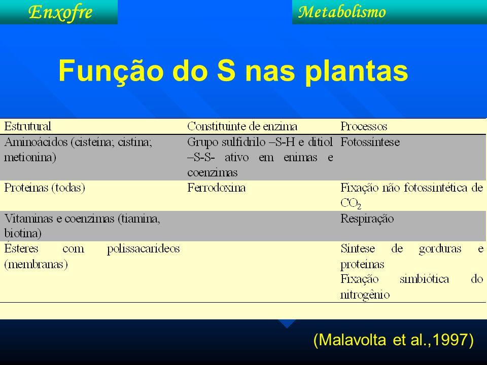 (Malavolta et al.,1997) Metabolismo Enxofre Função do S nas plantas