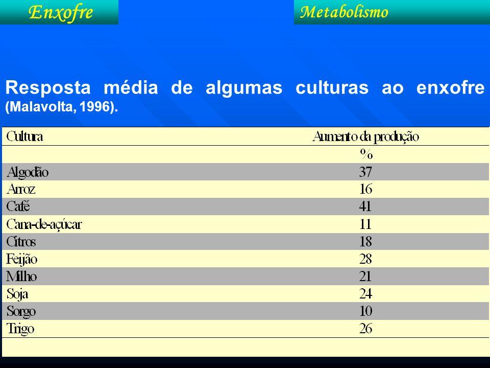 Metabolismo Resposta média de algumas culturas ao enxofre (Malavolta, 1996). Enxofre