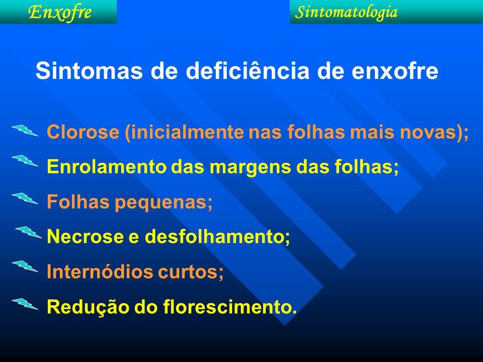 Sintomas de deficiência de enxofre Clorose (inicialmente nas folhas mais novas); Enrolamento das margens das folhas; Folhas pequenas; Necrose e desfol