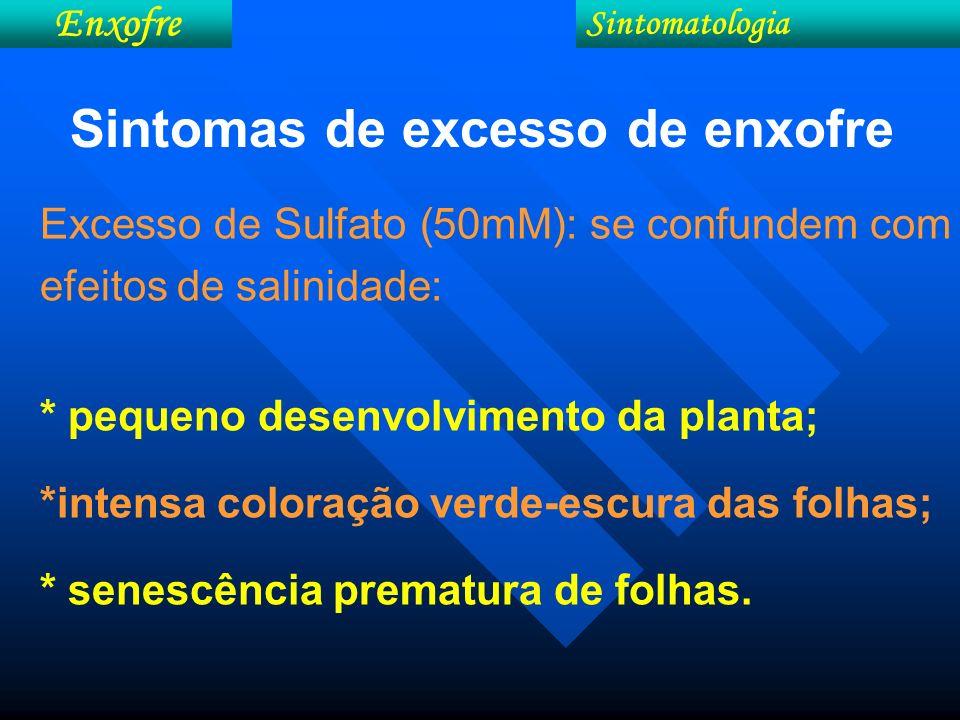 Sintomas de excesso de enxofre Excesso de Sulfato (50mM): se confundem com efeitos de salinidade: * pequeno desenvolvimento da planta; *intensa colora