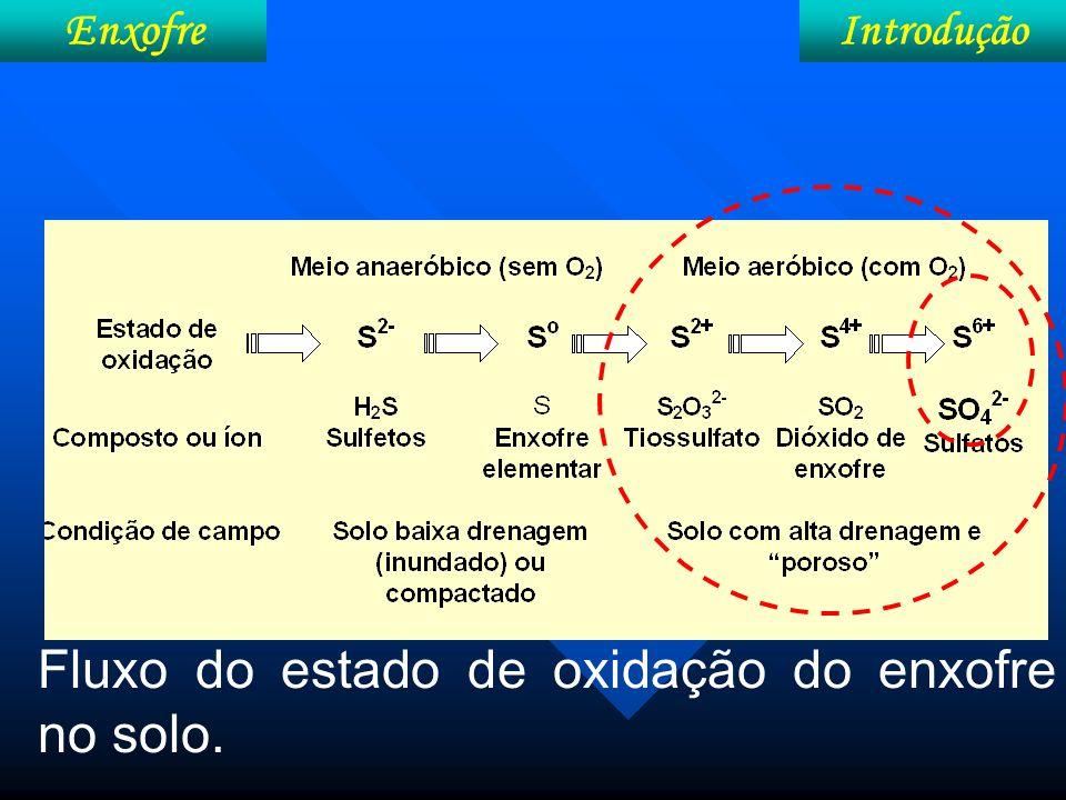 Metabolismo Enxofre Resumo Absorção Transporte Redução/ assimilação Redistri- buição