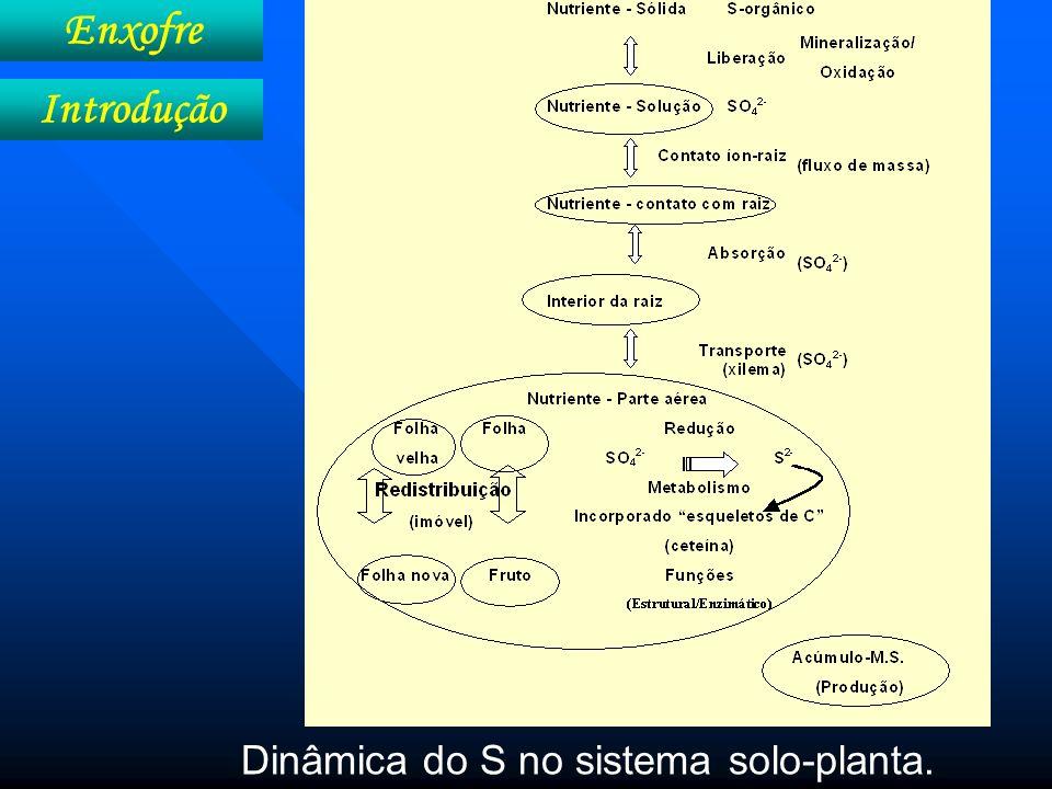 Absorção Contato SO 4 -2 - raiz Enxofre Absorção, transporte e redistribuição Elemento Quantidade necessária para uma colheita de 9 t ha -1 kg ha -1 fornecidos por Intercepta- ção Fluxo de massa Difusão S (SO 4 2- )20 1 19 0