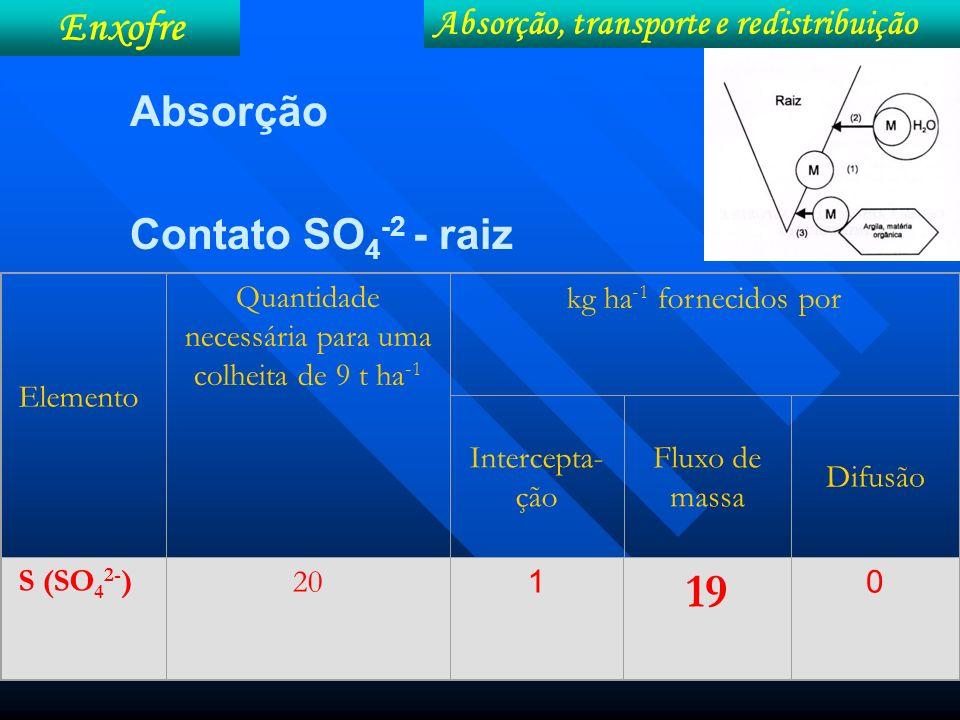 Absorção Contato SO 4 -2 - raiz Enxofre Absorção, transporte e redistribuição Elemento Quantidade necessária para uma colheita de 9 t ha -1 kg ha -1 f