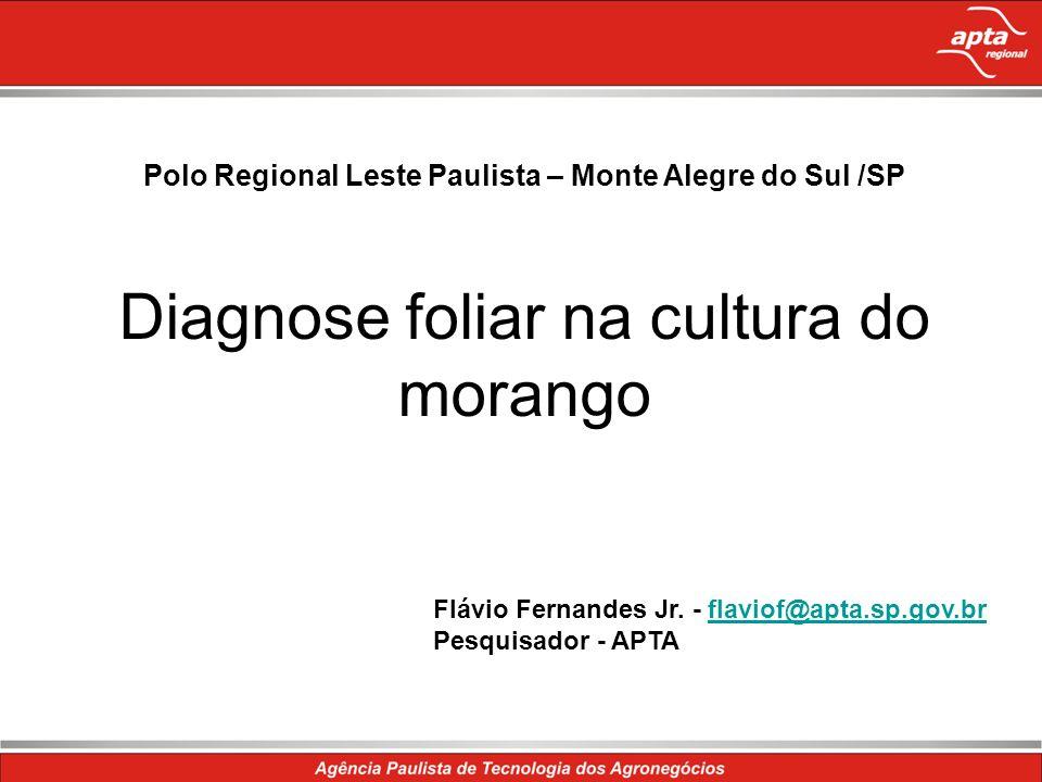 Polo Regional Leste Paulista – Monte Alegre do Sul /SP Diagnose foliar na cultura do morango Flávio Fernandes Jr. - flaviof@apta.sp.gov.brflaviof@apta