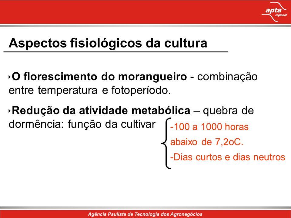 Aspectos fisiológicos da cultura O florescimento do morangueiro - combinação entre temperatura e fotoperíodo. Redução da atividade metabólica – quebra