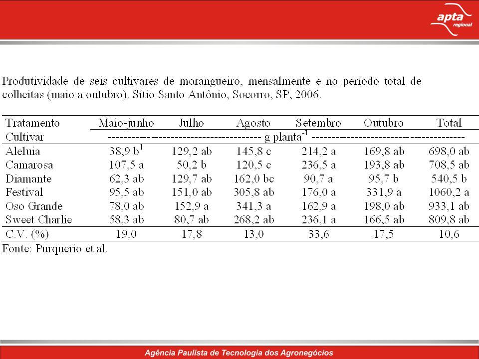 Aspectos fisiológicos da cultura O florescimento do morangueiro - combinação entre temperatura e fotoperíodo.